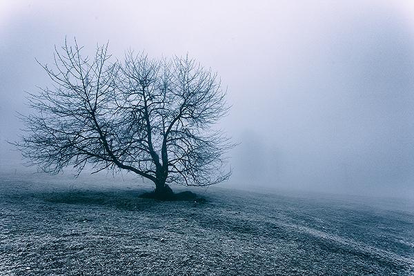 Grainbach, Baum